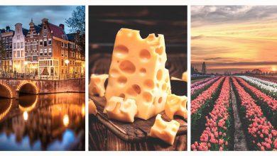 Тюльпанные выходные - фототур в нидерланды