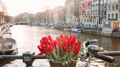 5 причин посетить Нидерланды в апреле
