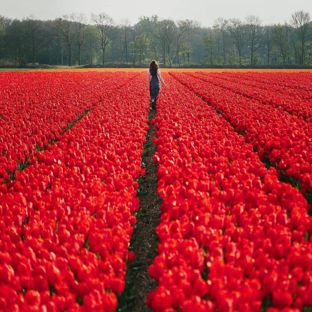 5 причин посетить нидерланды
