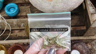 marihuana-v-amsterdame